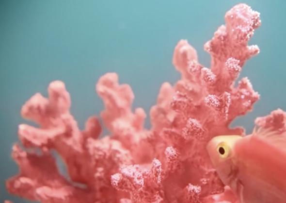 Інститут кольору Pantone вибрав колір 2019 року: Pantone 16-1546 «Living Coral», «живий корал», колір морських рифів і заходу сонця, колір милого життя івнутрішньоїпотребив оптимізмі.