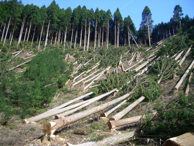 """Результат пошуку зображень за запитом """"ліси рубають"""""""